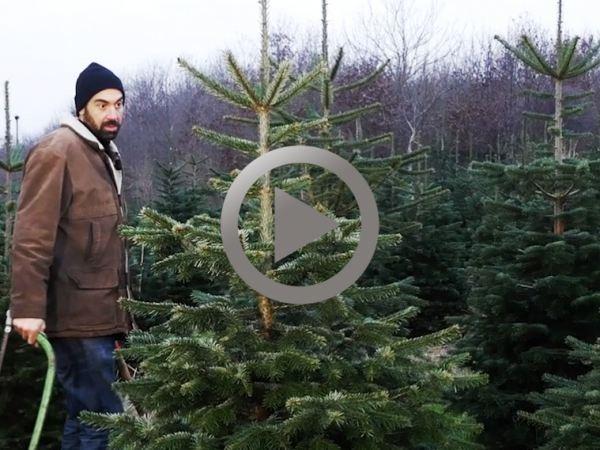 X-Mas Tree Qixxit